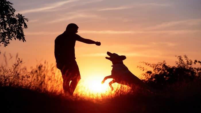 Matrimonio Tra Uomo E Animale : Biencuyano ar actualidad de la región cuyo