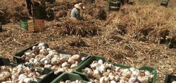 """Noe Barbeito del FIT denuncia que una empacadora y exportadora de ajos esconde trabajadores """"en negro"""" para zafar inspecciones"""