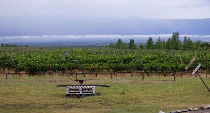 Una potencial industria en crecimiento: La provincia de San Luis ya tiene 103 hectáreas de viñedos y el Malbec es el más cultivado