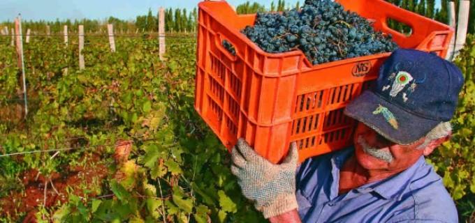 """Las cooperativas vitivinícolas rechazan la aplicación del impuesto a las ganancias ya que """"atenta directamente contra la naturaleza de estas entidades no lucrativas"""""""